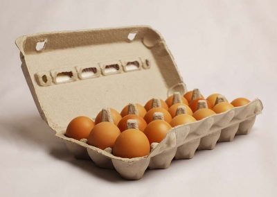 18 Eggs in egg tray
