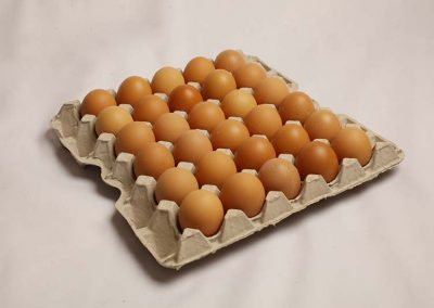 30 Eggs in egg tray