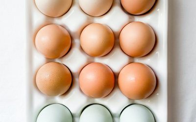 Eggshell Colours; What do they mean?